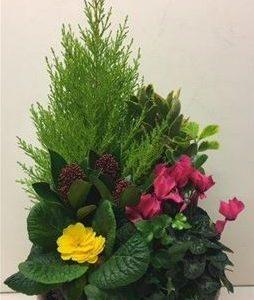 Coupe De Plantes Grande Taille