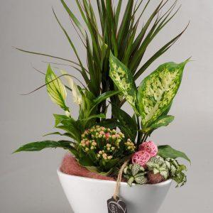 Coupe De Plantes Intérieures