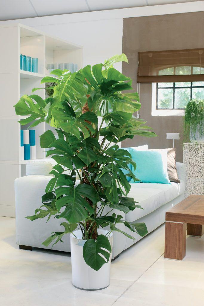Entretenir ses Plantes Vertes