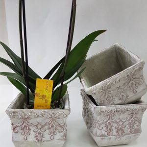 Contenant Orchidée Roma