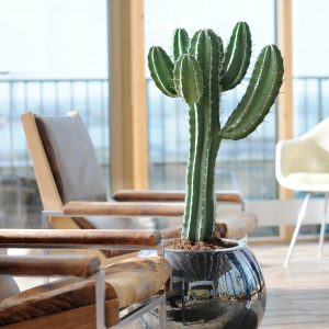Cactus Totem