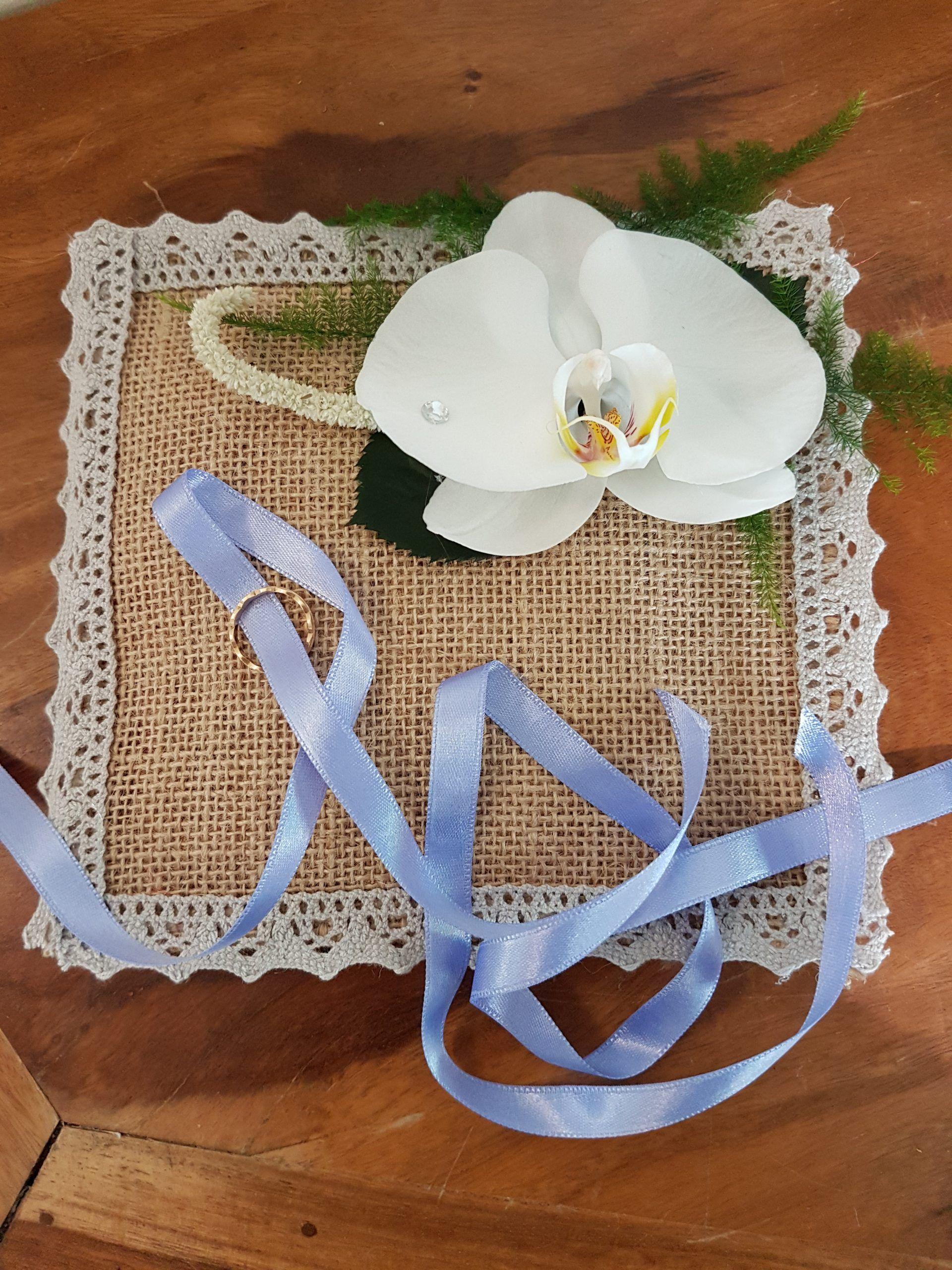 Entretenir Votre Orchidée