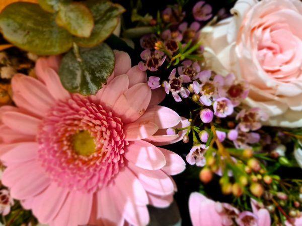 gypsophile germinis roses